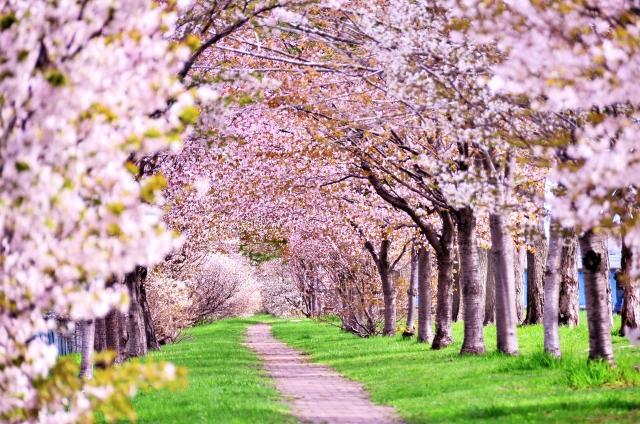 石からのメッセージ ~桜のように満開になる時がくる~