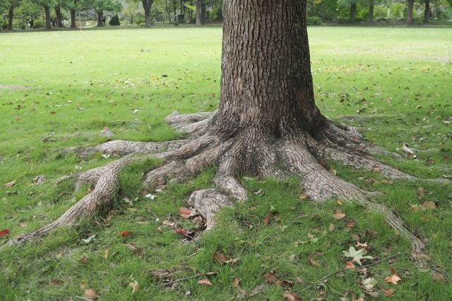 石からのメッセージ ~大地に根を張る~